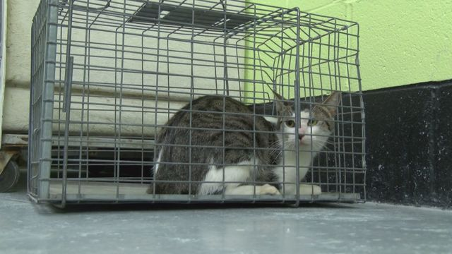 New program aims to keep feral cats healthy