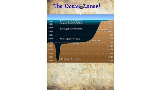 Ocean Zones And What Creatures Live In Them