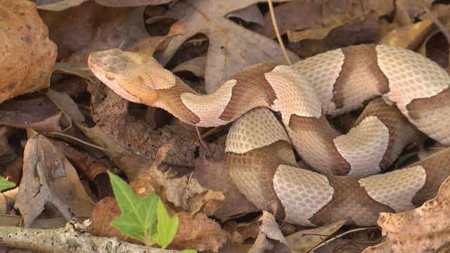 2 face animal cruelty charges after snake lit on fire in Walmart parking lot