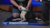 9 On Your Side Pet Visit - Beverly
