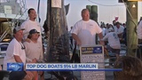 New record set at Big Rock Blue Marlin Tournament; 914lb marlin caught