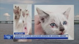 Kittens rescued after reports of abandoned animals on Neuse River Bridge